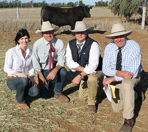 Sale hosts Kate and Justin Boshammer with auctioneer Michael Glasser, Glasser Total Sales Management and buyer Kevin Graham, Kevin Graham Consulting, Brisbane and the $14,500 equal top-priced bull, Glenoch-JK Johnny J602 at the Sandon Glenoch bull sale, Chinchilla, last Wednesday.