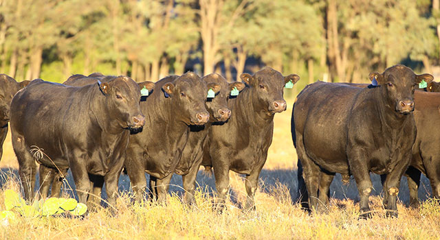bulls-2017