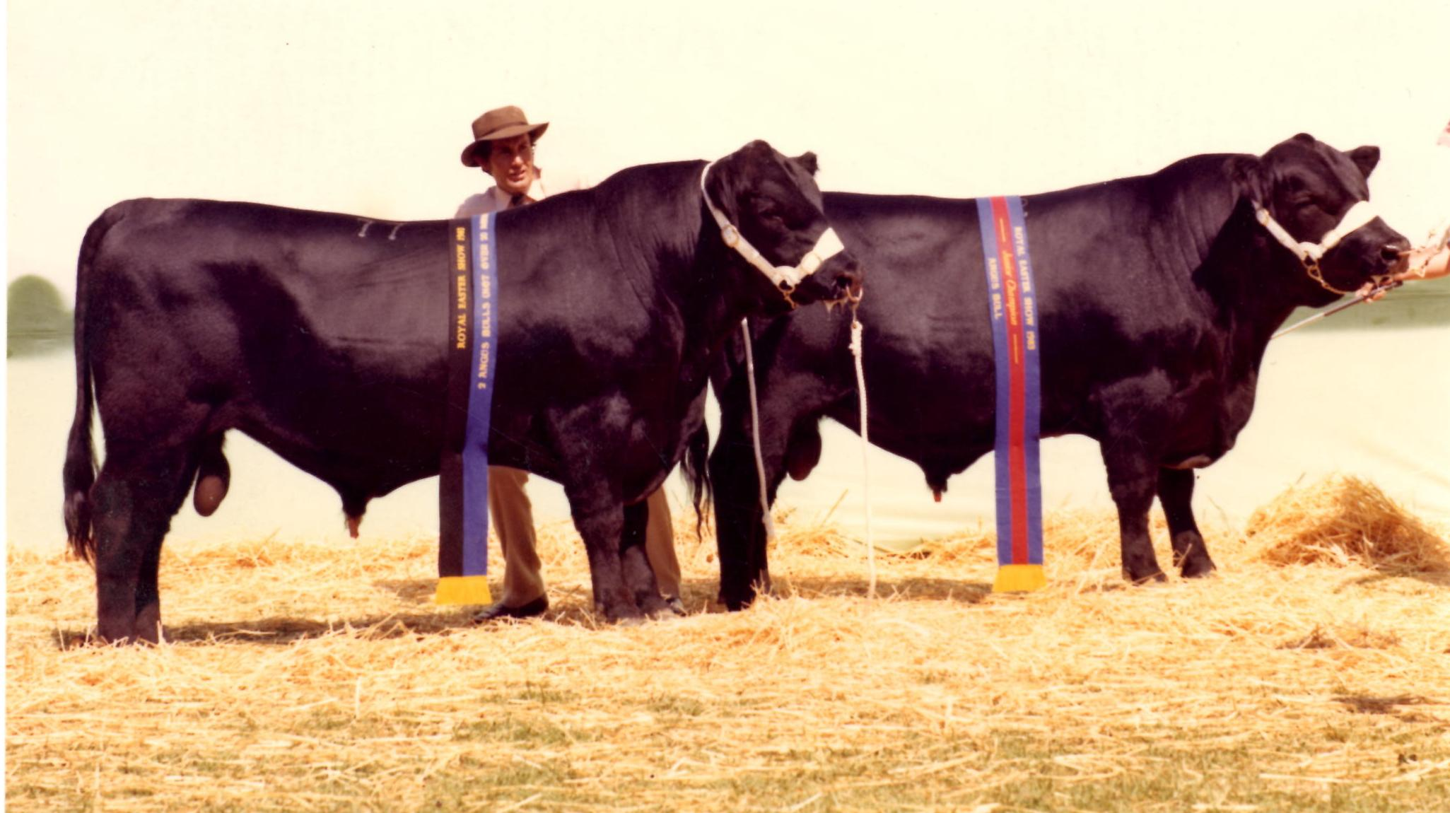 Junior Champion Bull & Pair of Bulls, Sydney Royal Easter Show 1983 - Glenoch Alistair & Glenoch Astronaut