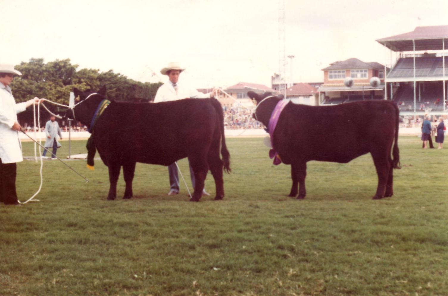 Junior Champion & Reserve Junior Champion Female, RNA 1983 - Glenoch Wattle B1 & Glenoch Flower A17