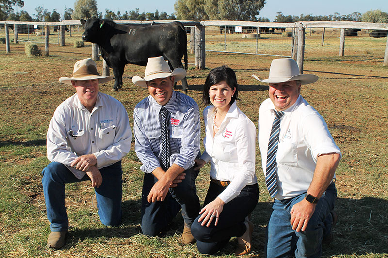Buyer, Ed Willis, Bullamon Plains, Thallon, Justin and Kate Boshammer, Glenoch-JK, Condamine and auctioneer Michael Glasser with the $12,000 top selling Glenoch-JK Landmark L612 (AI).