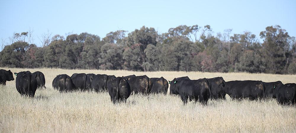 bulls-2020-2